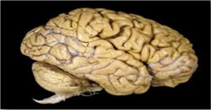 Read more about the article Reasons Why Your Brain Is Amazing
